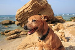 Dog and sea Royalty Free Stock Photos