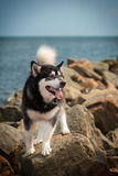 Dog at sea Royalty Free Stock Photos