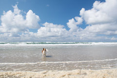 Dog in the sea Stock Image