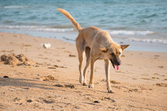 Dog and sea Royalty Free Stock Image