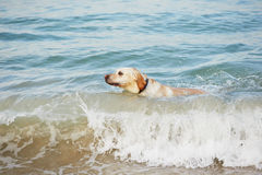Dog and sea Stock Photography