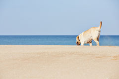 Dog and sea Royalty Free Stock Images
