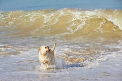 Dog and sea Royalty Free Stock Photo