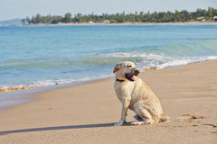 Dog and sea Stock Images