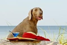 Dog on  seacoast Royalty Free Stock Images