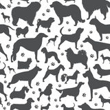 Dog seamless pattern. Heatlh care, vet, nutrition, exhibition Stock Photography