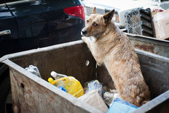 Dog searches for food Stock Images