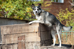 Dog searches for food Royalty Free Stock Images
