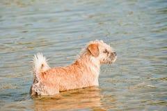Dog on the seashore. Portrait dog on the seashore Stock Images