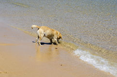 Dog on the seashore Royalty Free Stock Photo