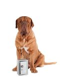 Dog security Stock Images