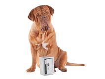 Dog security Stock Image