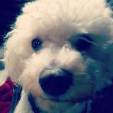 Dog selfie Stock Images