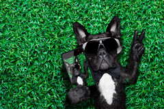 Dog selfie. Dog taking a selfie on a meadow with peace and victory fingers Royalty Free Stock Photo