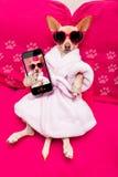 Dog selfie wellness spa Stock Images