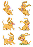 The dog set Stock Images