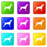 Dog set 9. Dog icons of 9 color set isolated vector illustration vector illustration
