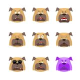 Dog set emoji avatar. sad and angry face. guilty and sleeping. P. Et sleeping emotion face. Bulldog Eggplant. Vector illustration Royalty Free Stock Image