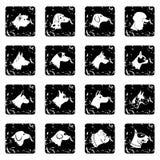 Dog set icons, grunge style Stock Photo