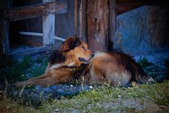 Dog in the shade. Beautiful common dog resting in a shadow of the barbecue Royalty Free Stock Photo