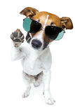Dog in shades. A dog in geen shades and high five stock photo