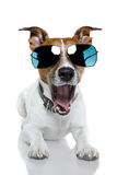 Dog in shades. A dog wearing blue shades and bored stock photography