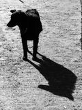Dog shadow. Dog and shadow. Watch dog. Strong dog shadow stock images