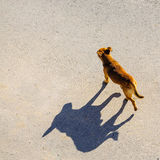 Dog shadow abstract walking street sun Royalty Free Stock Photo