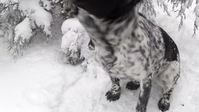Dog shakes off snow stock video footage