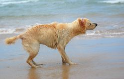 Dog shaking off water Stock Photos
