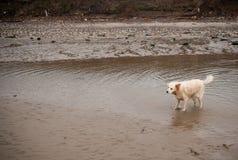 Dog shaking off water Stock Image