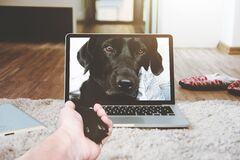 Dog shaking paw through computer screen Stock Photo