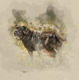 dog sharpei иллюстрация штока