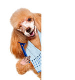Dog shaves. Creative. Royalty Free Stock Images