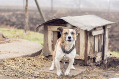 Dog shed Royalty Free Stock Image