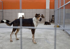 Dog in a shelter. Homeless dog in a shelter behind bars, looking at camera Stock Images