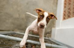 Dog Shelter. Is an animal shelter with a sad cute dog looking up wanting someone to take him home today stock photo