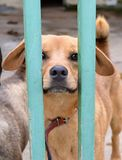 Dog in a shelter Royalty Free Stock Photos
