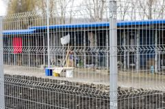 Dog shelter enclosures. Charity and mercy theme, animal shelter, dog rescue, volunteer work royalty free stock images