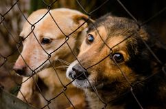 Dog in shelter eyes of an abandoned animal in captivity royalty free stock photography