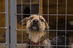 Dog in shelter eyes of an abandoned animal in captivity royalty free stock images