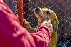 Dog in the shelter stock images