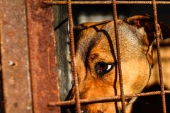 Dog shelter - Hope - Animal life stock images