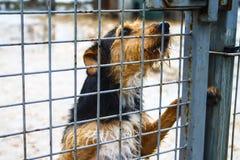 Dog shelter - Hope - Animal life Royalty Free Stock Images