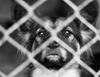 Dog Shelter Stock Photography
