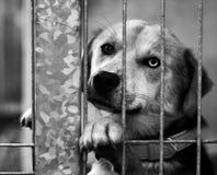 Dog Shelter. S in Europe, sad dog Stock Images