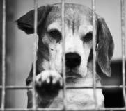 Dog Shelter. S in Europe, sad dog Royalty Free Stock Photo