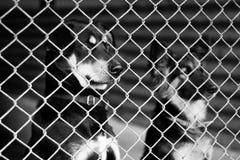Dog Shelter. S in Europe, sad dog Stock Image
