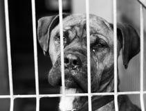 Dog Shelter. S in Europe, sad dog Royalty Free Stock Image