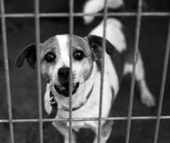Dog Shelter Royalty Free Stock Photography
